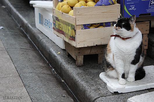 Котка от Истанбул