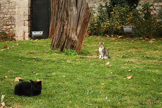 Котки от Истанбул
